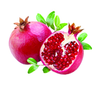 Suncare Ingredient Image: Organic Punica Granatum (Pomegranate) Fruit Oil