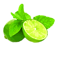 Suncare Ingredient Image: Organic Citrus Aurantifolia (Lime) Oil