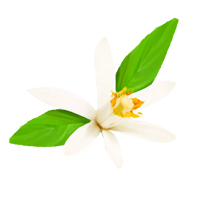 Suncare Ingredient Image: Lemonflower Oil