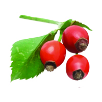Suncare Ingredient Image: Organic Lycium Barbarum (Goji Berry) Fruit Extract
