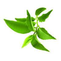 Suncare Ingredient Image: Organic Camellia Sinesis (Green Tea) Leaf Extract