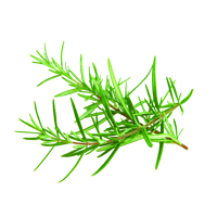 Suncare Ingredient Image: Organic Rosmarinus Officinalis (Rosemary) Leaf Oil